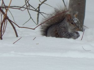 Image8squirrel