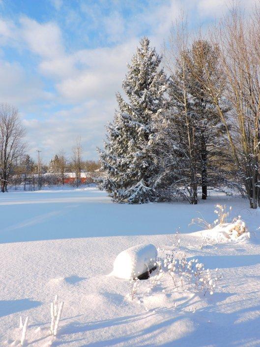 snowy-yard-rs